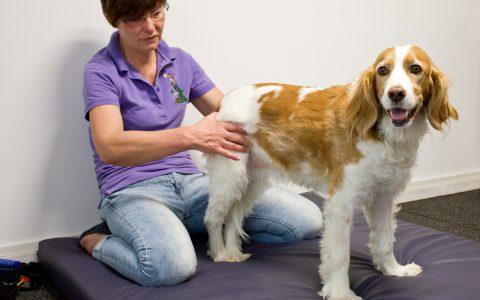 Größere Patienten werden auf der Bodenmatte behandelt